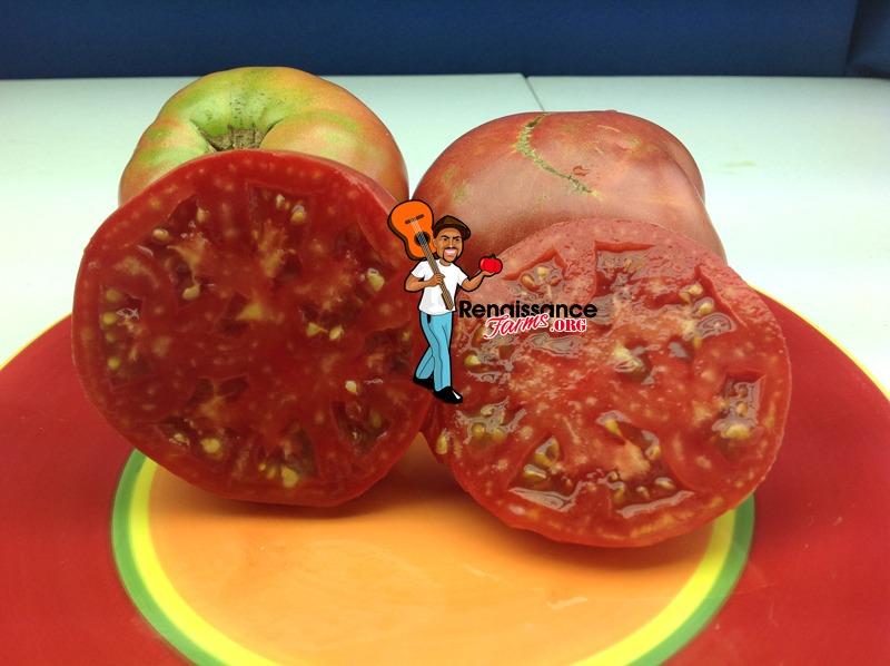 German Head Tomato 2019