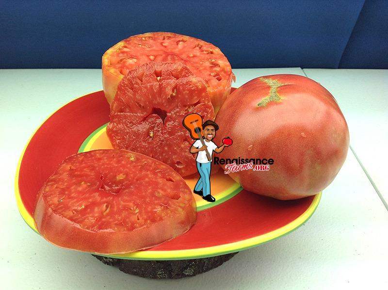 Giant Belgium Beefsteak Tomato