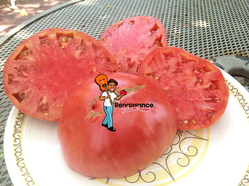 Giant Belgium Pink Tomato