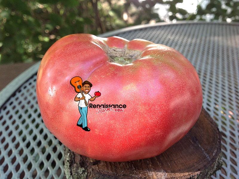 Giant-Belgium-Tomato