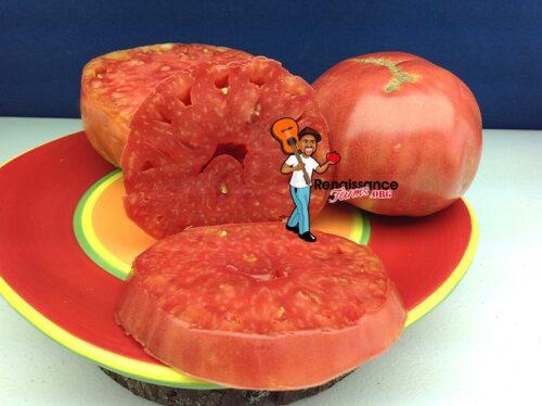 Giant Belgium Tomato Image