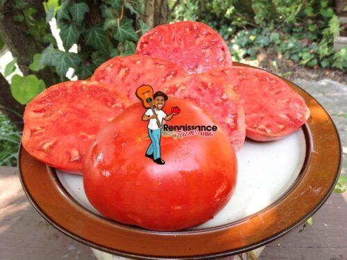 Gigant Doohov Tomato