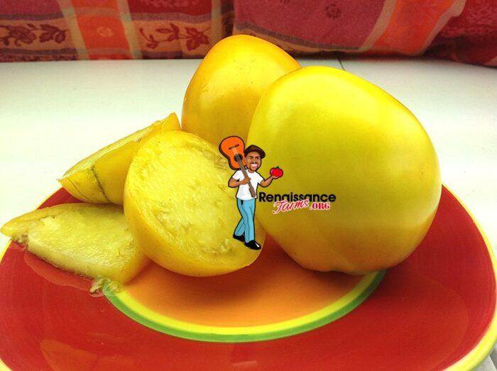 Golden King Of Siberia Heirloom Tomato