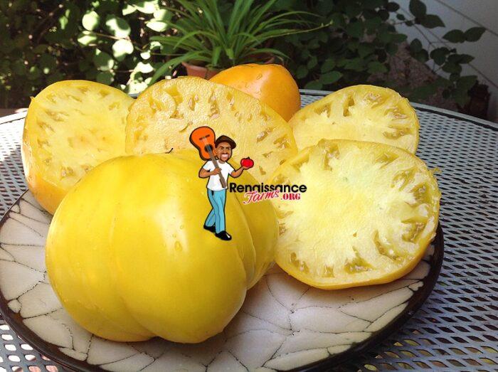 Golden-King-Of Siberia-Tomato