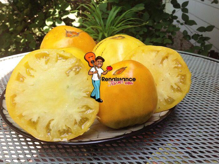 Golden King Of Siberia Tomatoes