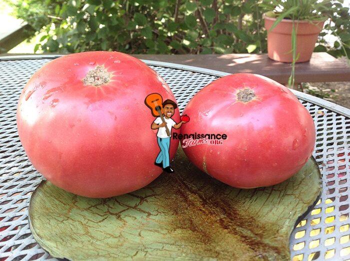 Granny Cantrell's Tomato 2019