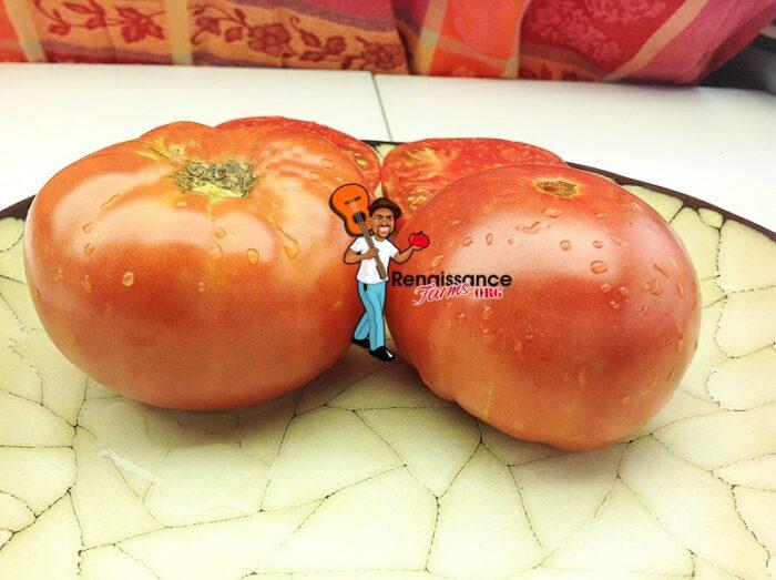 Granny Cantrell's Tomato