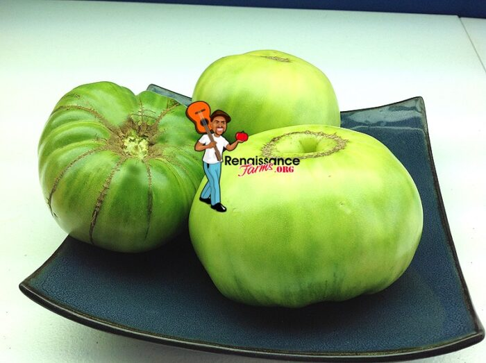 Green Giant Tomato