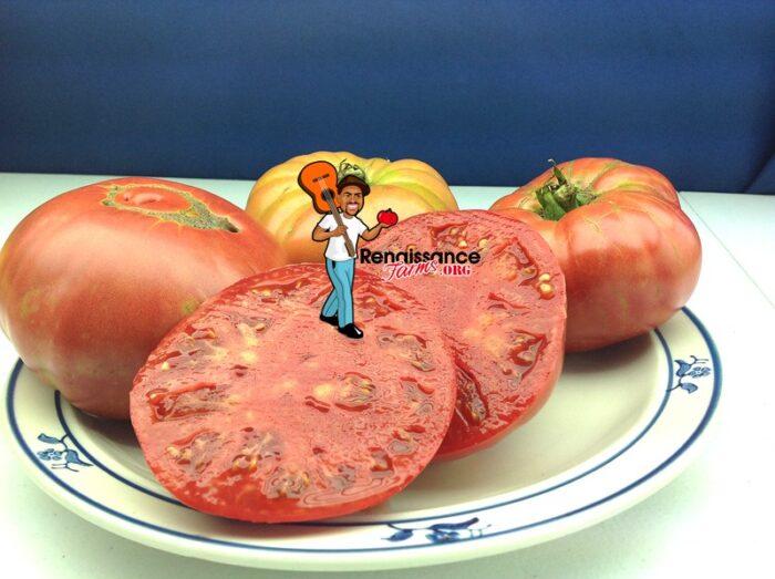 Heirloom Tomato Granny Cantrell's