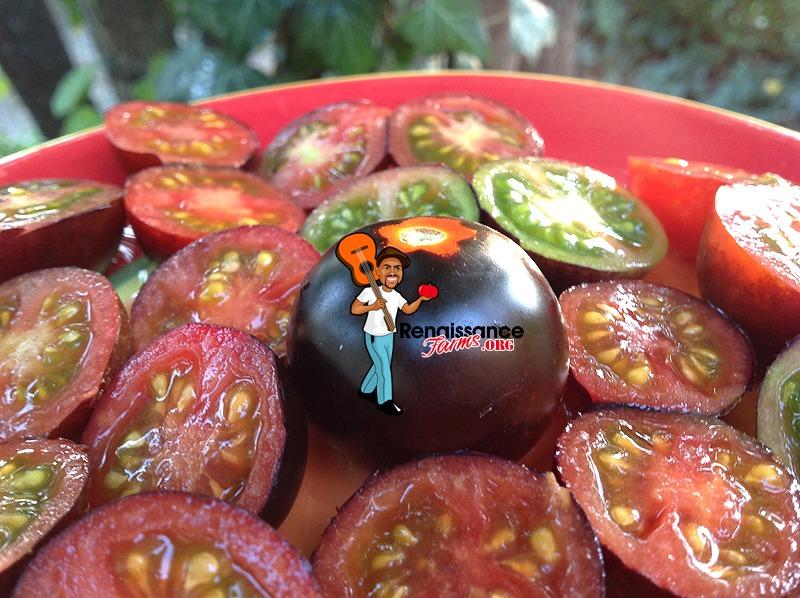 Helsing Junction Blues Tomato Images