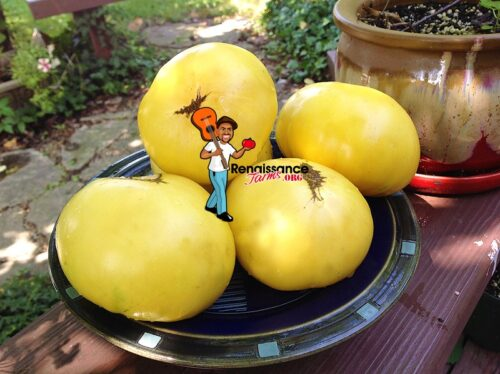 Hugh's Tomato