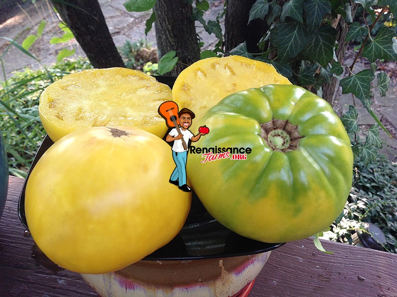 Hugh's-Tomato