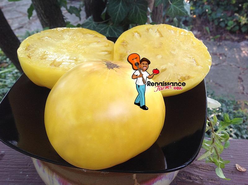 Hugh's Tomato Image