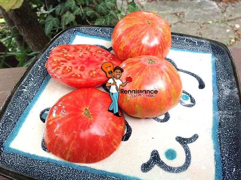 Maiden's Fire Tomato