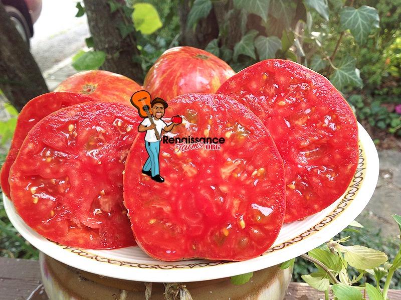 Maidens Fire Tomato