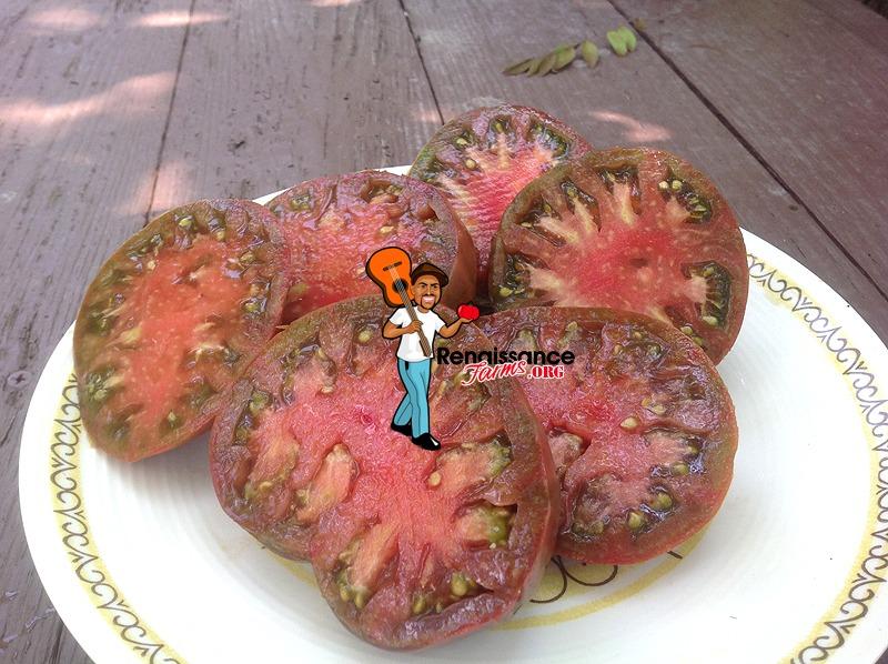 Owen's Purple Tomato 2019