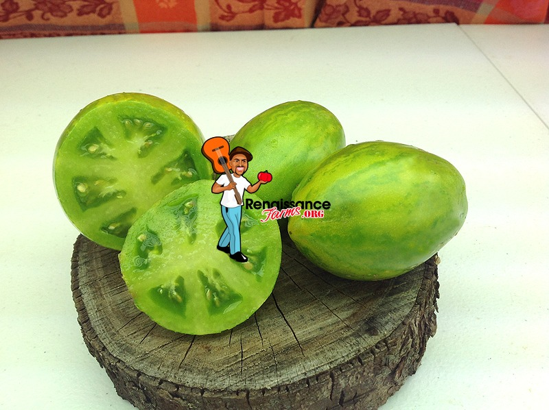 Saucy Mart Dwarf Tomato Image
