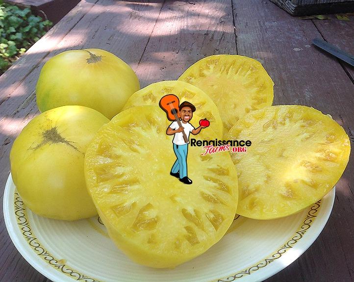 TC-Jones-Tomato