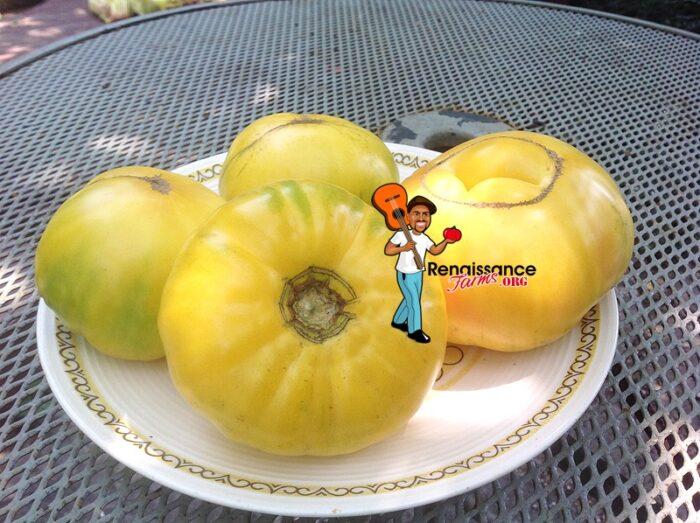 TC Jones Tomato