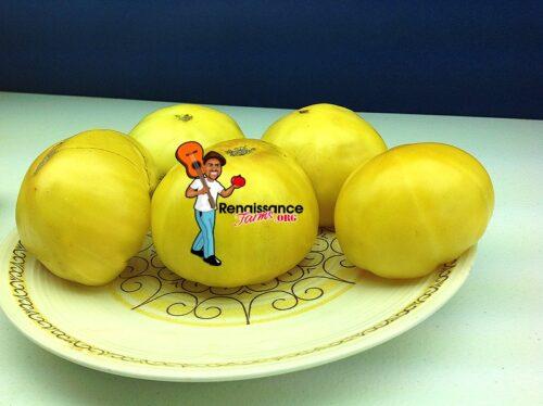 TC Jones Tomatoes