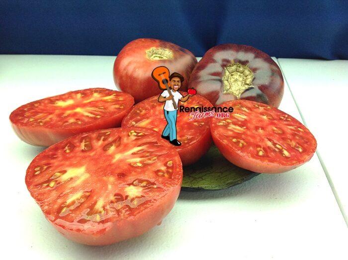 Tomato Aurora Blue