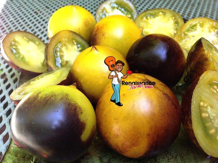 Tomato Belle Coeur H34 Gelb