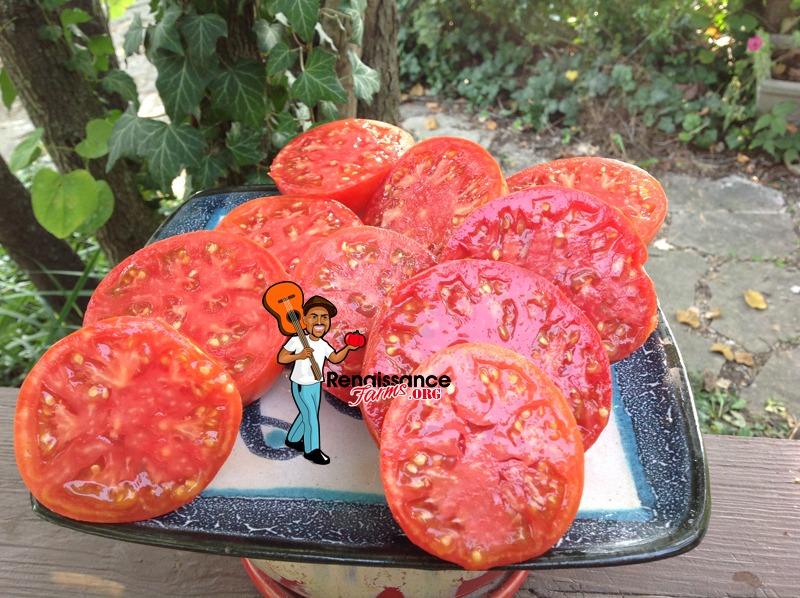 Tomato Black Mountain Pink