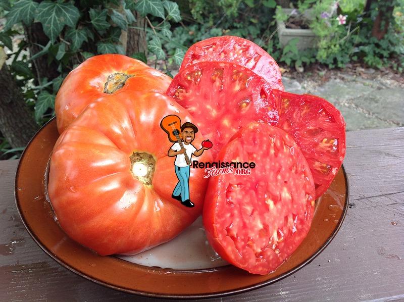Tomato Brutus Magnum