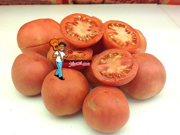 Tomato Bushy Chabarovsky Dwarf