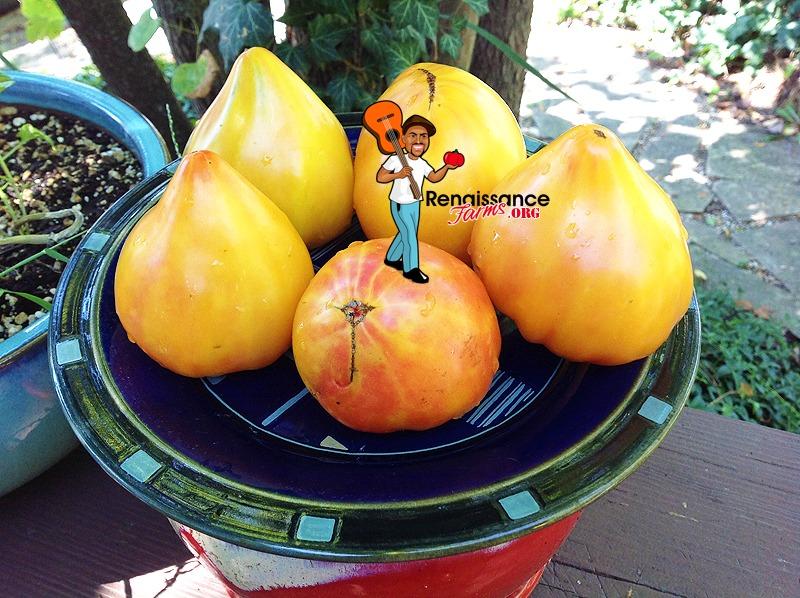 Tomato Desedmona's Heart