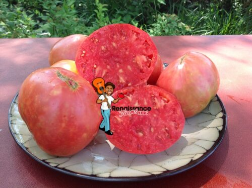 Fishlake Oxheart Tomato