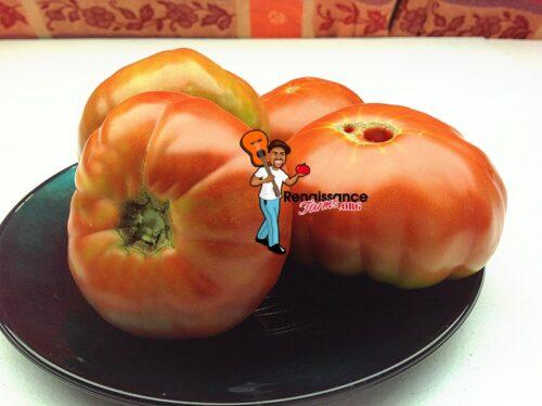 Tomato Pantano Romanesco 2019