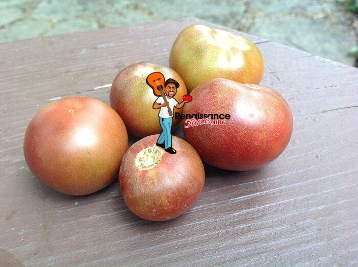 Velvet Night Dwarf Tomato
