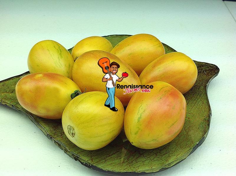 Yellow Taste Tomatoes