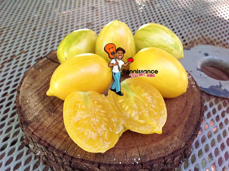 Yellow_Taste_Tomato