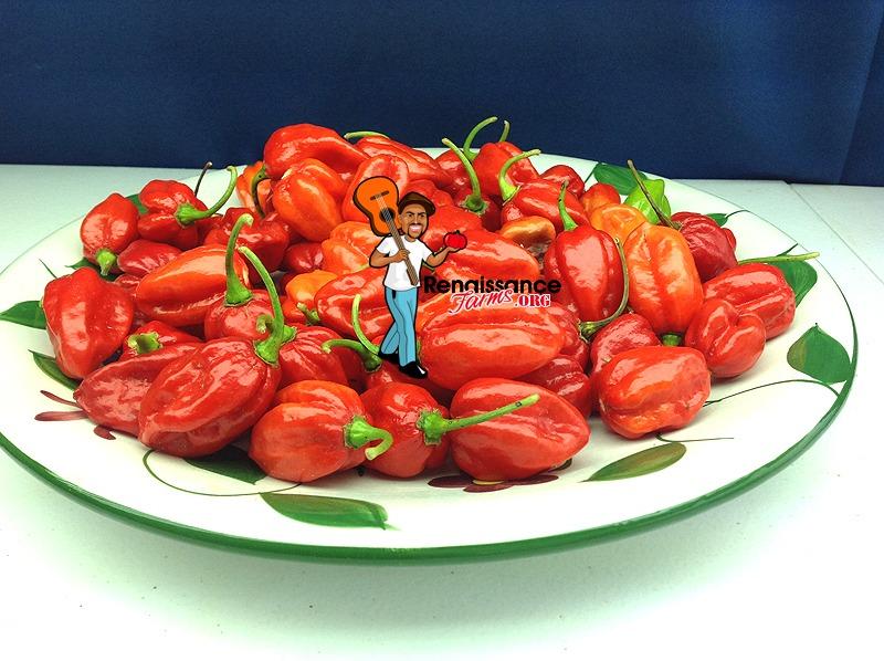 Aji Dulce Pepper
