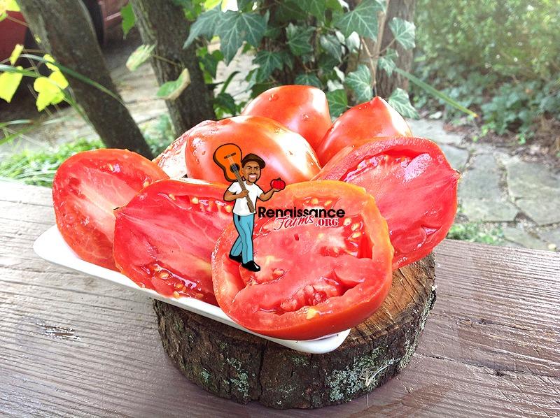 Amos Coli Tomato 2019