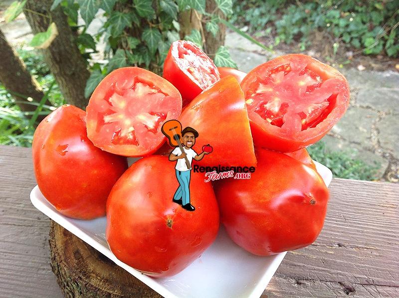 Amos Coli Tomato