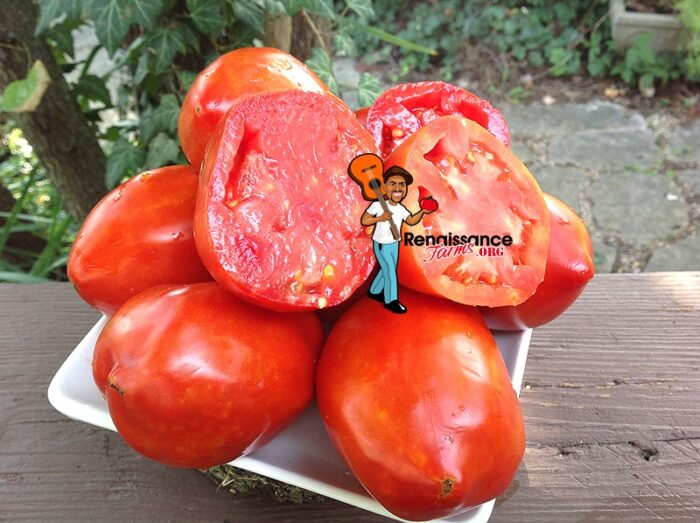 Amos Coli Tomatoes