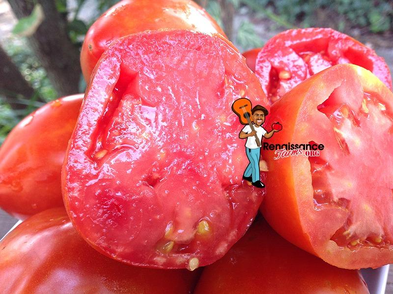 Amos_Coli_Tomato