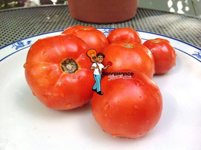 Bejing Zao Shu Chinese Tomato