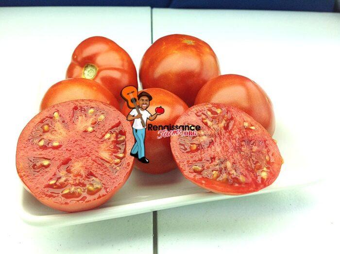 Bejing-Zao-Shu-Tomatoes
