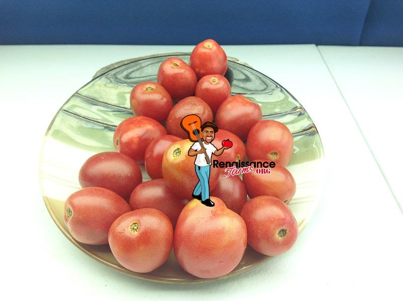 Bendigo Blush Dwarf Tomato 2018