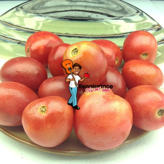 Bendigo Blush Dwarf Tomato