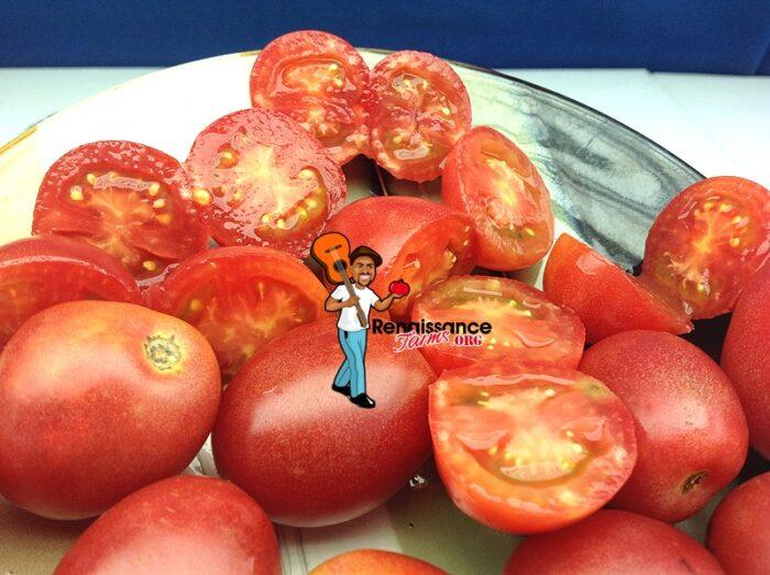 Bendigo Blush Dwarf Tomato Seeds