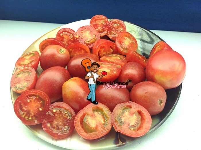 Bendigo Blush Tomato