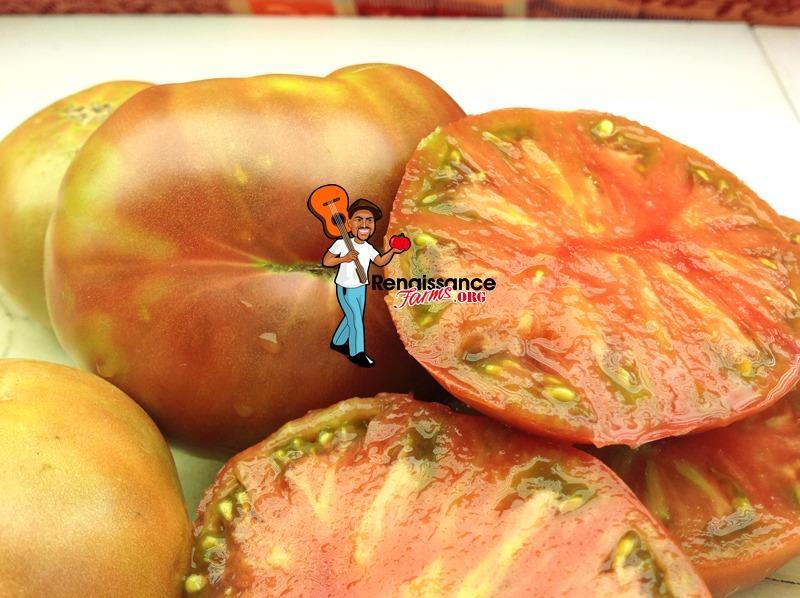 Black Angus Dwarf Tomato