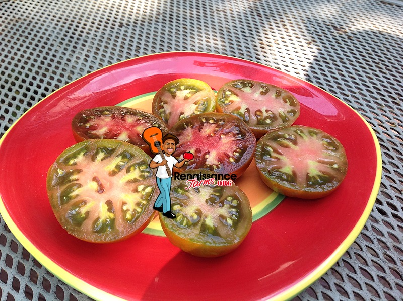 Black Prince Tomato 2018