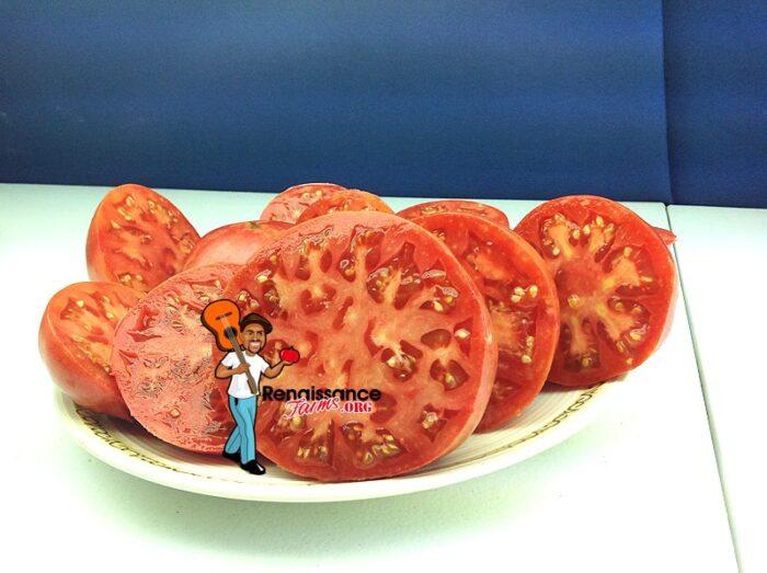 Brimmar Tomato Seeds