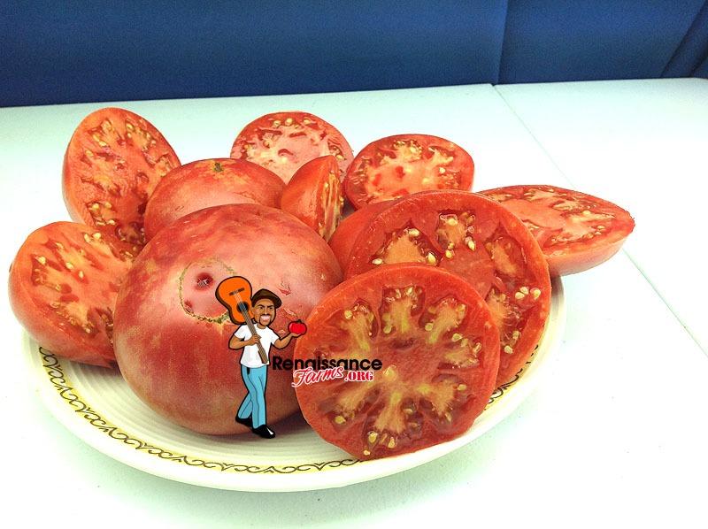Brimmer Tomato 2018
